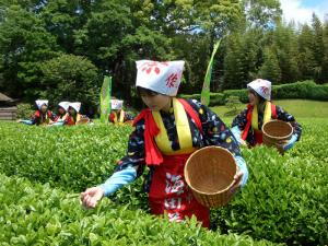 Tea‐picking