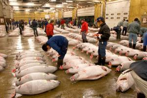 Tsukiji Fishmarket Area Tour Packages